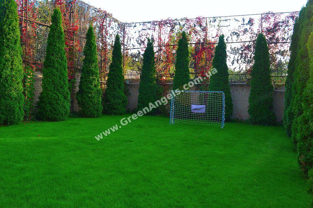 Газон посевной спортивный. Sports lawn sowing.