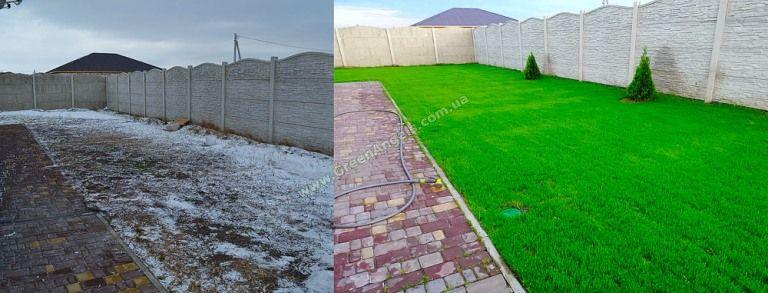 Пример посевного спортивного газона. Травосмесь - Дания.