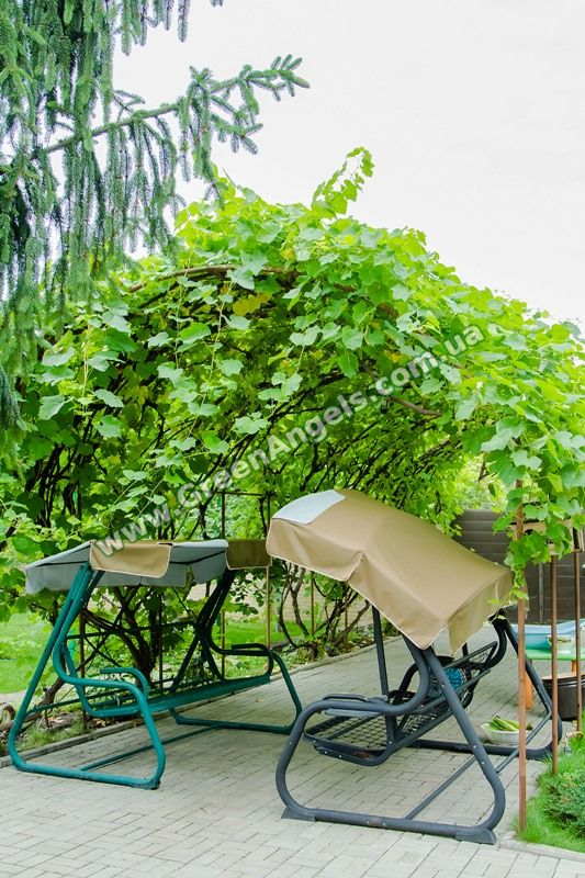 Фото беседки для винограда