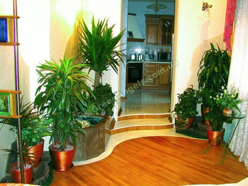 Фото растений для озеленения зимнего сада