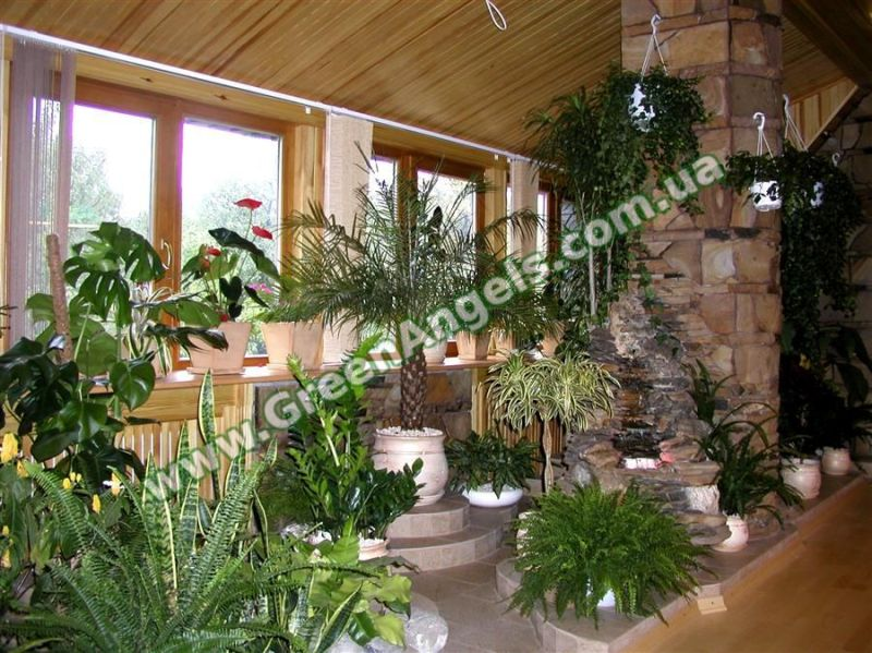 Фото оформления зимнего сада