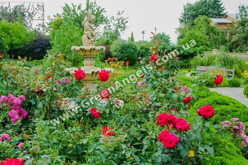 Фото клумбы с розами