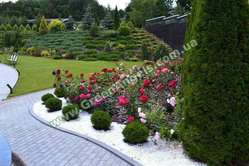 Фото растений для озеленения склона
