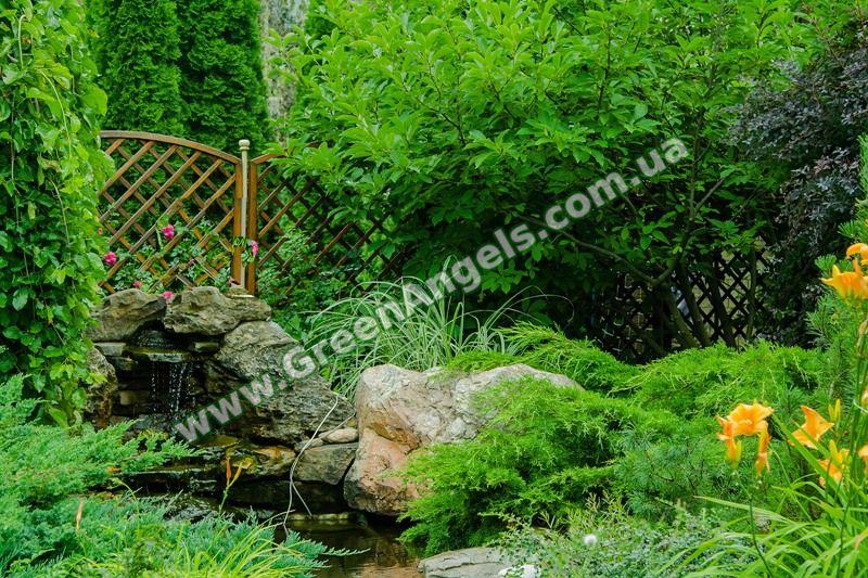 Лиственные растения для озеленения.
