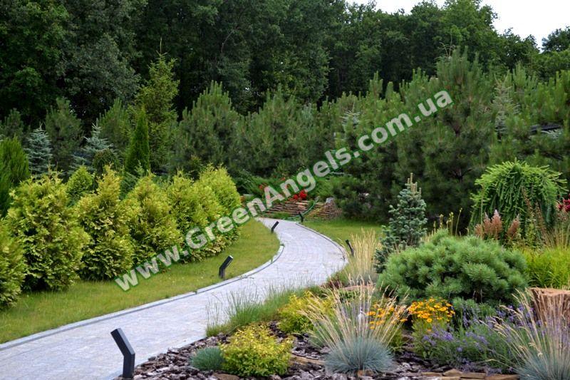 Фото хвойных растений в озеленении