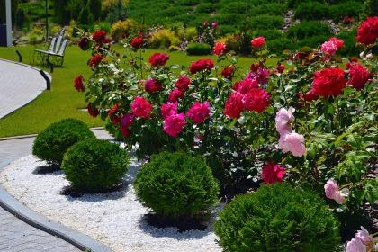 Фотогалерея «Розы»